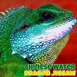 Chinese Water Dragon Jigsaw