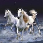 Jeu Horses Slide
