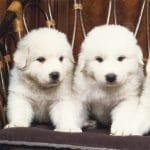 Lovely Puppy Slide