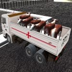 Truck Transport Domestic Animals